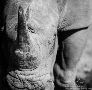 Van Zyl Photography - General Game Portfolio Gallery Category Professional Photography - Rhino Face