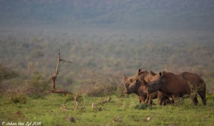 Van Zyl Photography - General Game Portfolio Gallery Category Professional Photography - Rhinos