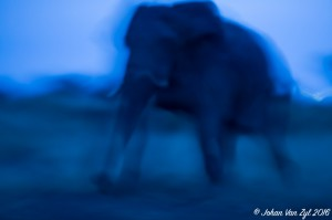 Van Zyl Photography - General Game Portfolio Gallery Category Professional Photography - Elephant in Motion Photo