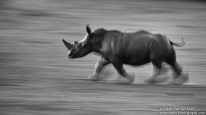 Van Zyl Photography - General Game Portfolio Gallery Category Professional Photography - Rhino in Motion Photo