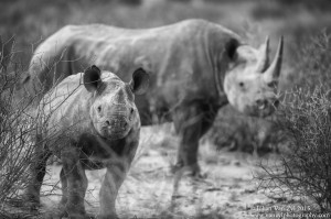 Van Zyl Photography - General Game Portfolio Gallery Category Professional Photography - Rhino with Young