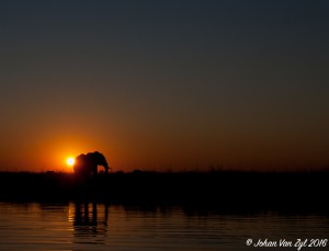 Van Zyl Photography - General Game Portfolio Gallery Category Professional Photography - Elephant At Sunset silhouette